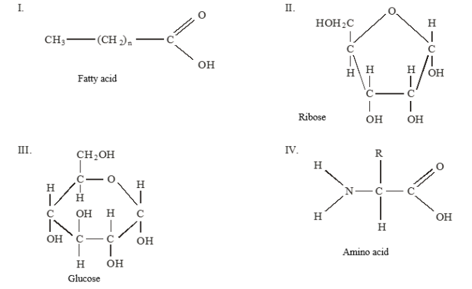 distinguish between catabolism and anabolism giving an example of each