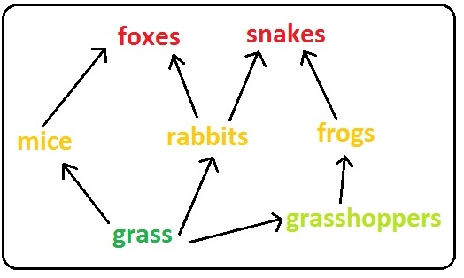 example of a producer in a food chain
