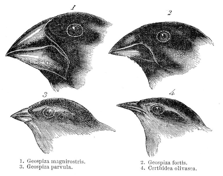 variation in a species example natural selection